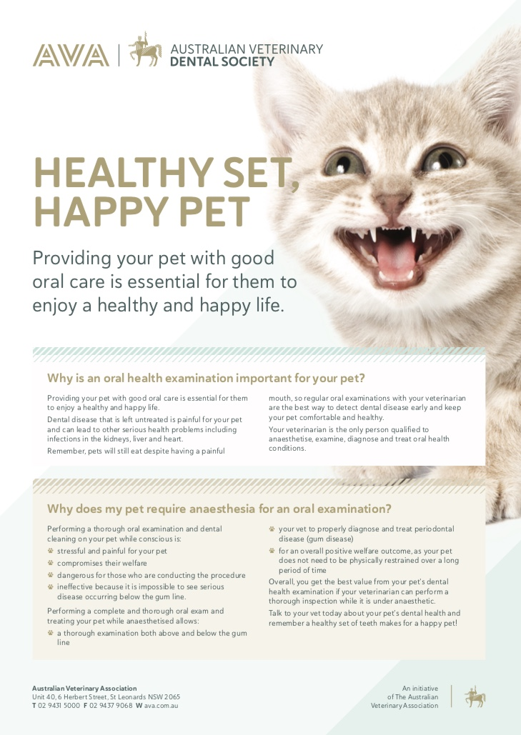 cat smiling dental poster