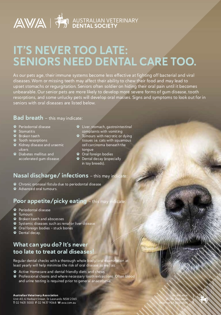 old dog dental poster